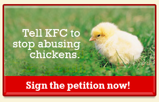 Tell KFC to stop abusing chickens.